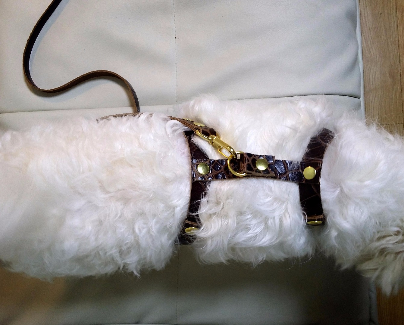 Picture of Leather Dog Harness & Strap! 1 HOUR!