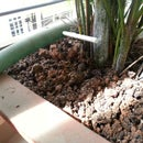 Home Plant-watering system