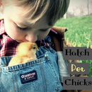 How to Hatch Pet Chicks (For Beginners!)