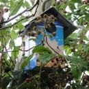Tetra Pak Bird Box Idea.