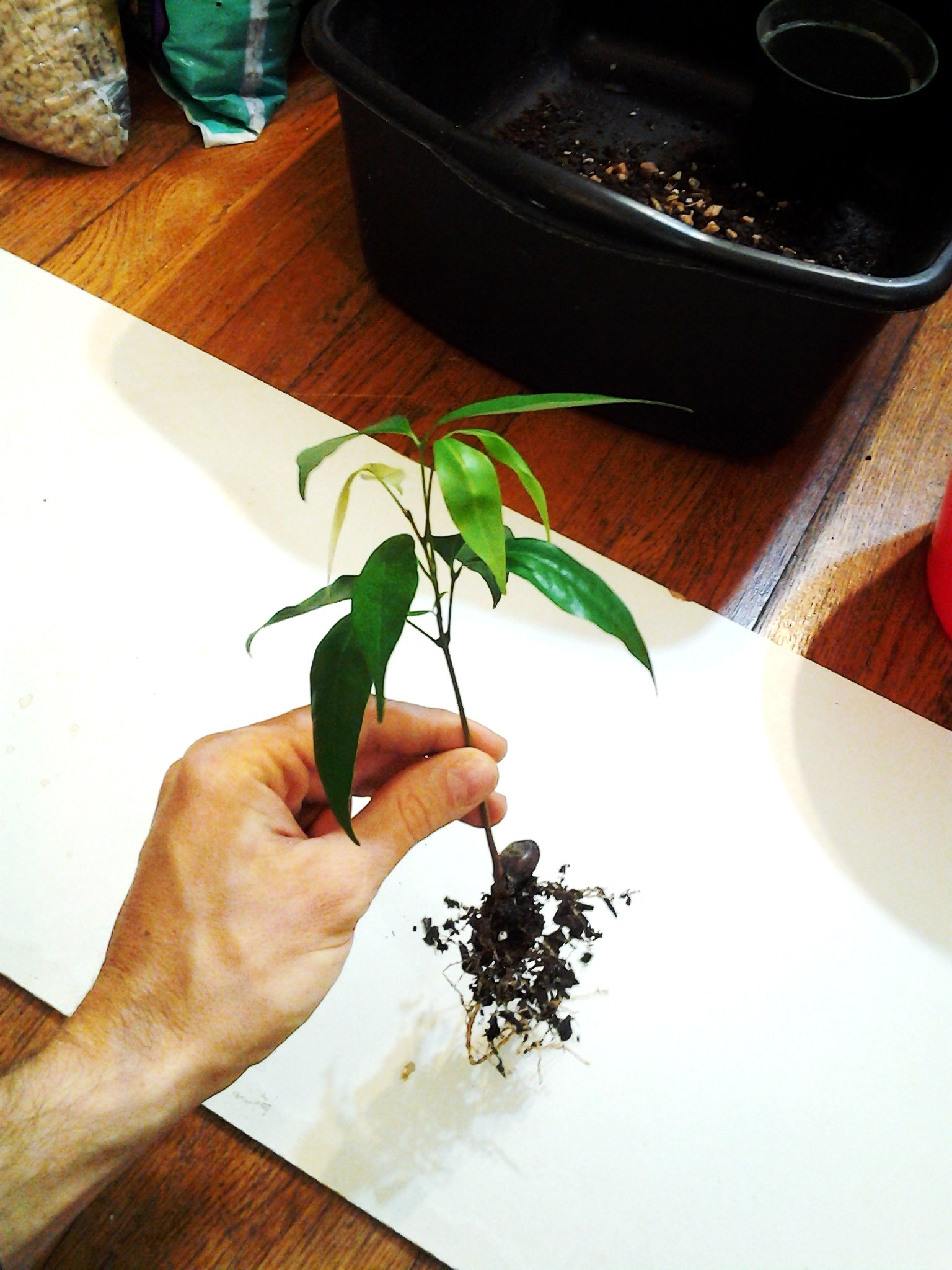 Picture of Remove the Plant/pot