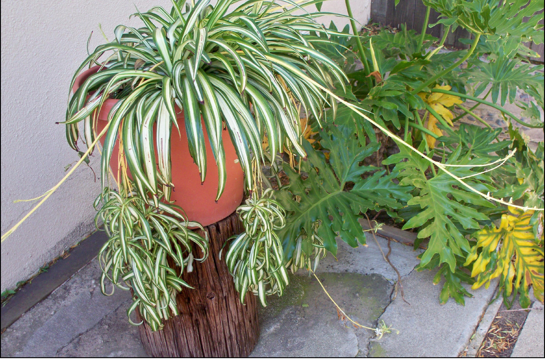 Picture of Make Planter Stands for Your Garden