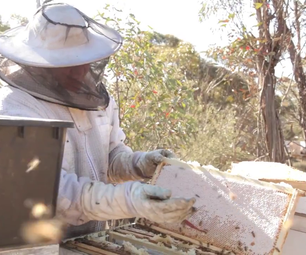 How to Collect Honey From Beehives