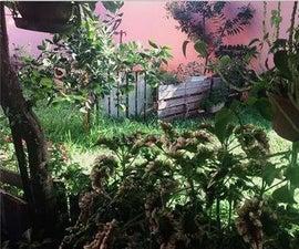 How Organic Garden in Your Garden