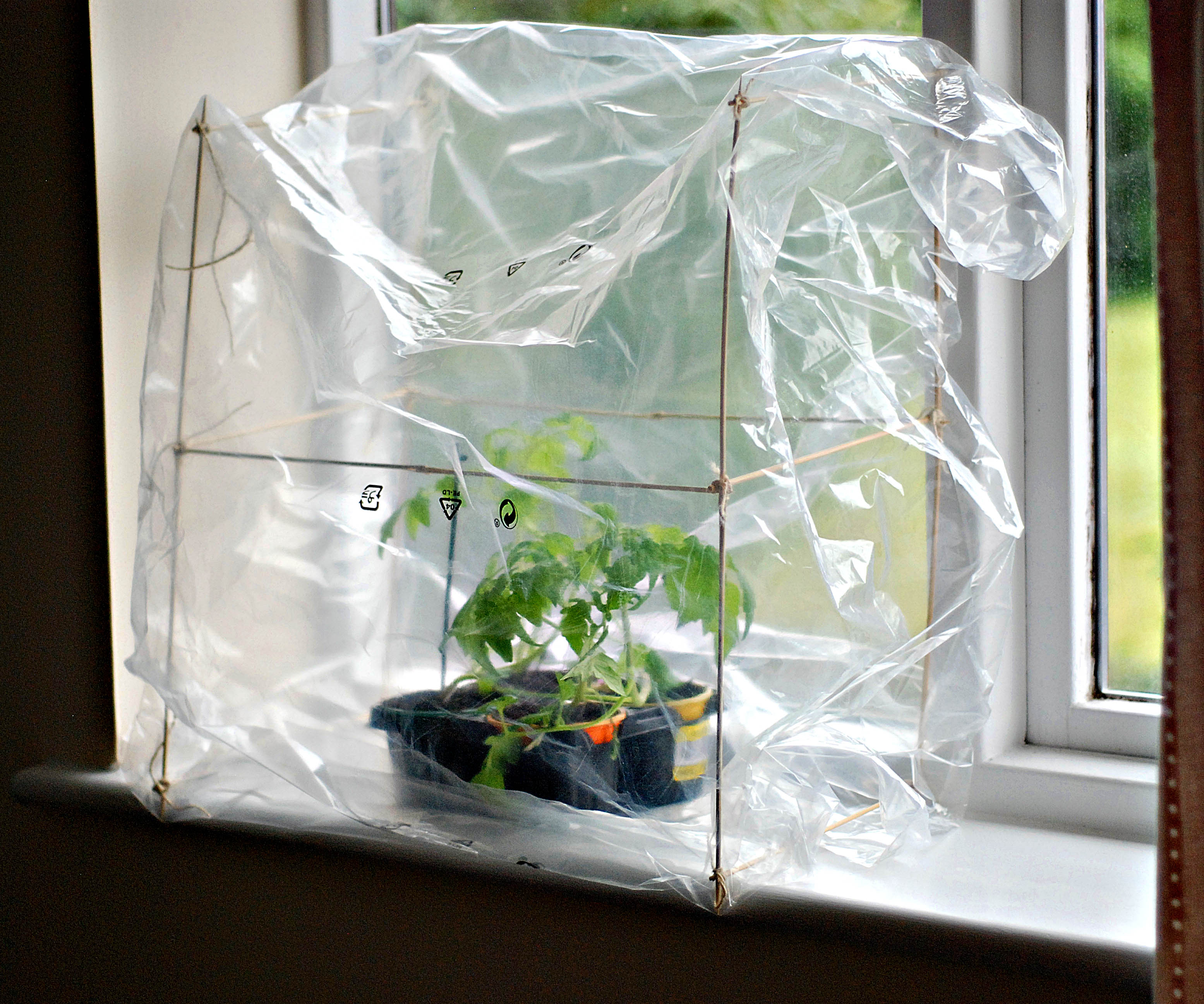 Picture of Enjoy Your Mini Greenhouse!