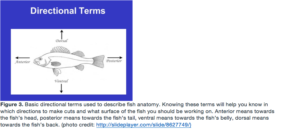 Picture of Familiarize Yourself With the Basic Directional Terms of Fish Anatomy