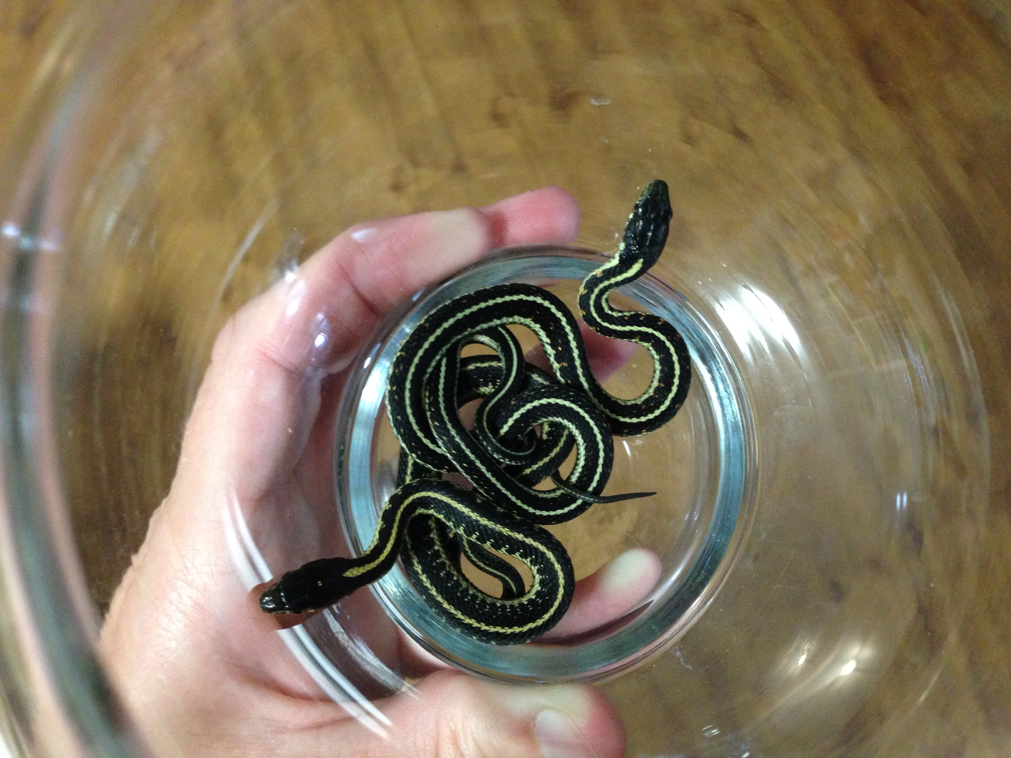 How to Take Care of Garter Snakes: 3 Steps