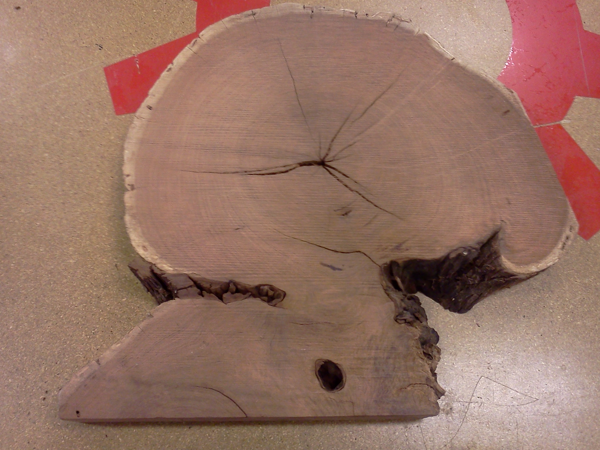 Picture of Log Cross-Section Relief Sculpture WIP