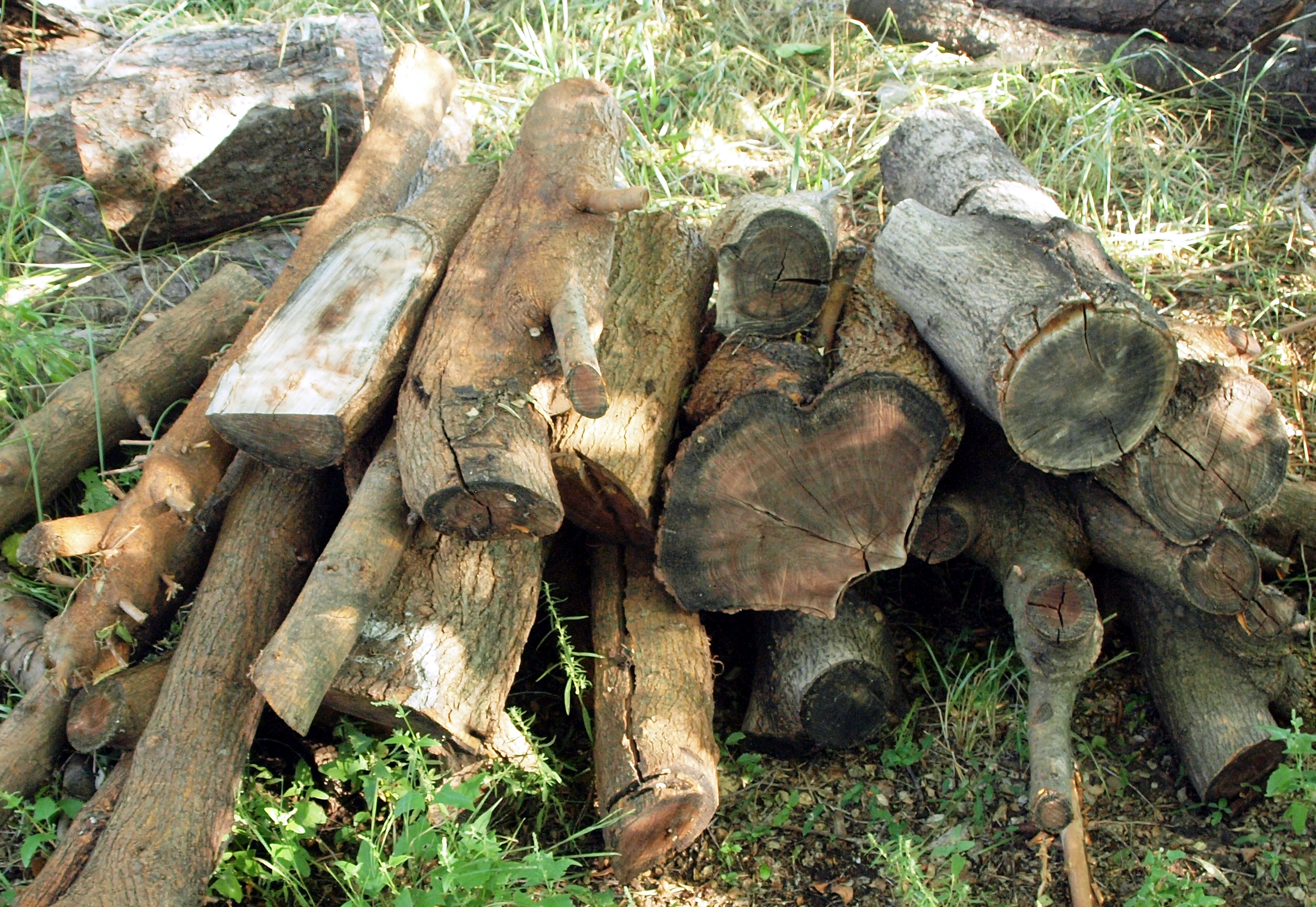 Picture of From Scratch (logs) Again