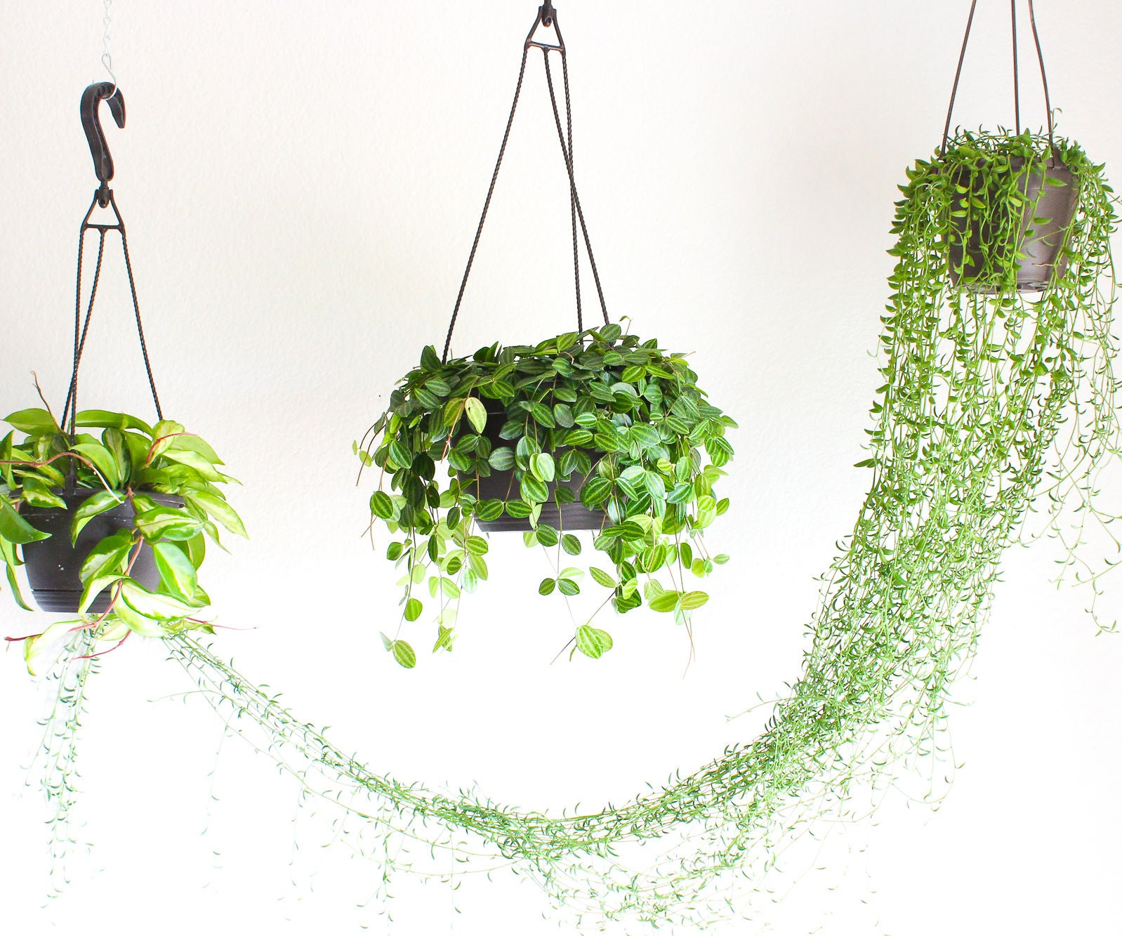 How to Hang a Plant From the Ceiling : 5 Steps (with Pictures)