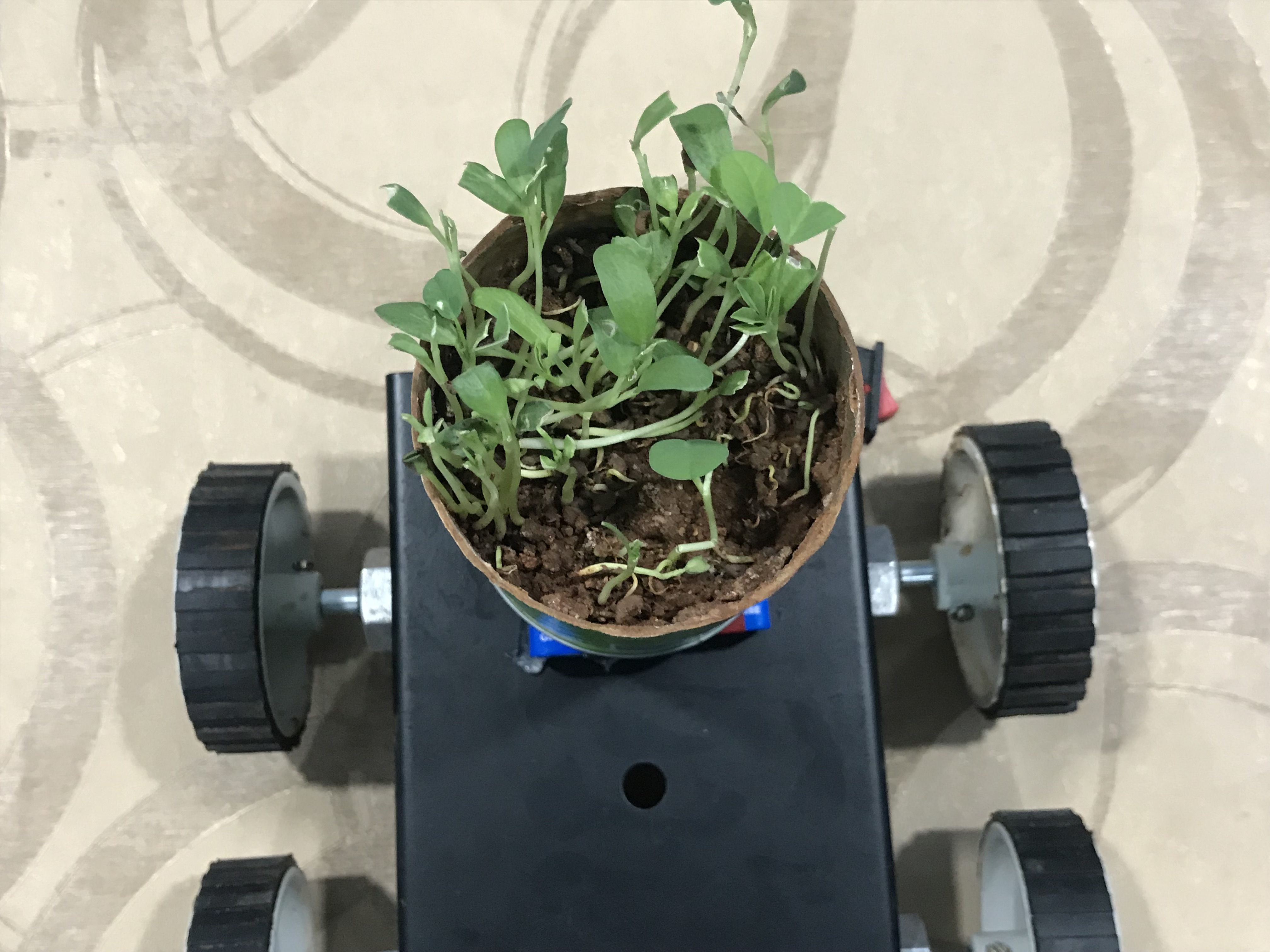 Picture of Adding the Plant to the Car