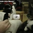 Toy mashup: Darth Vader says meow!