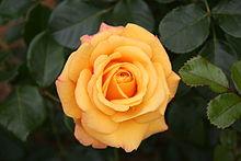 Lemon Rose Bath Salt