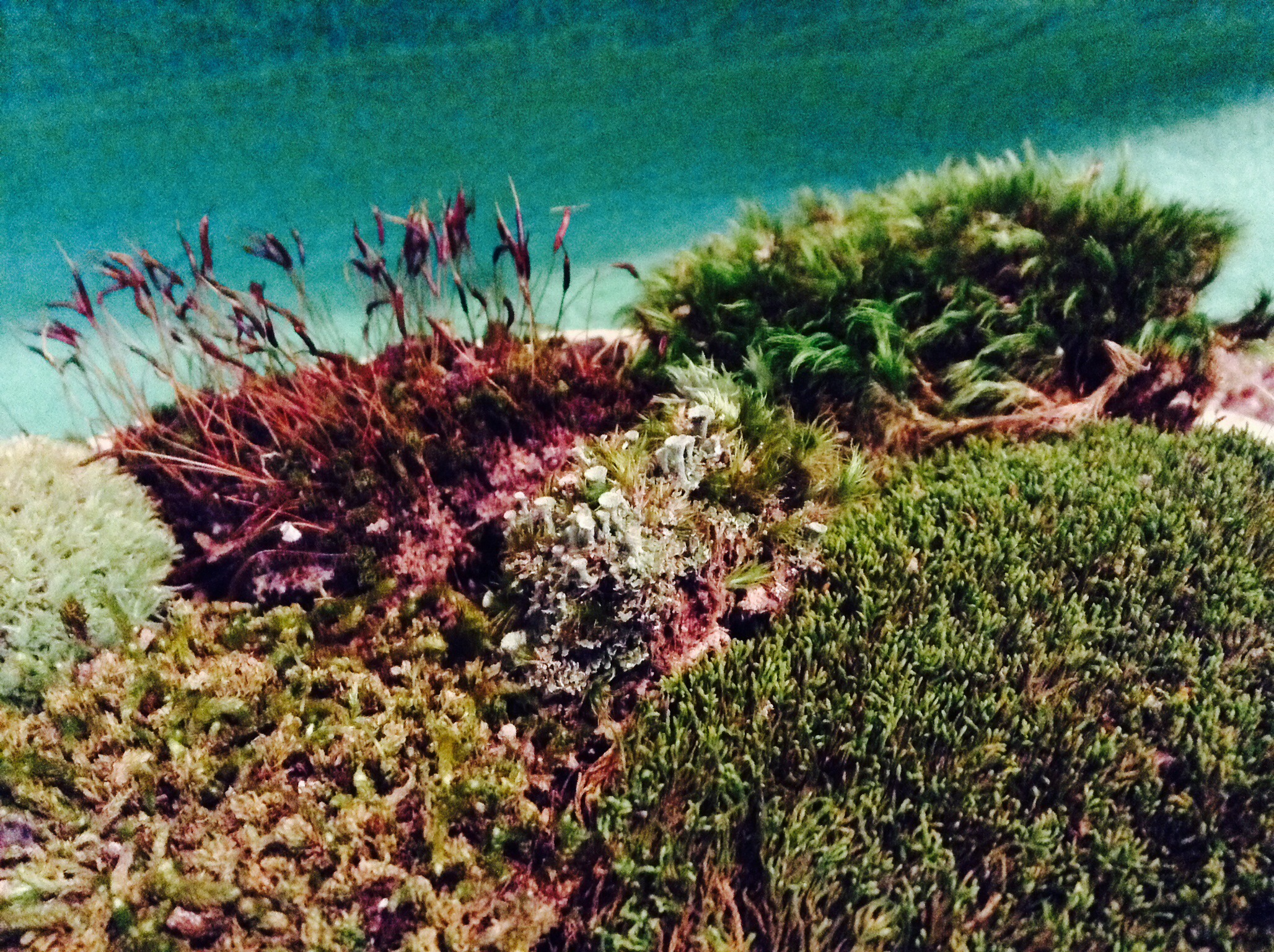 Picture of Easy Moss Garden