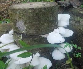Low Tech Mushroom Log