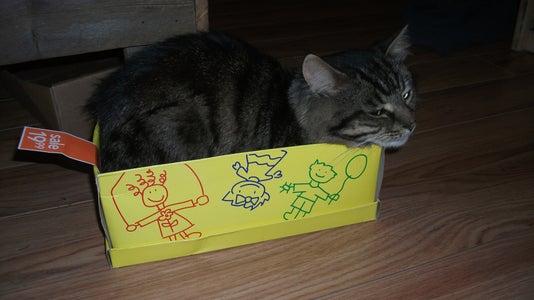 Obligatory Cute Cat in a Box Photo