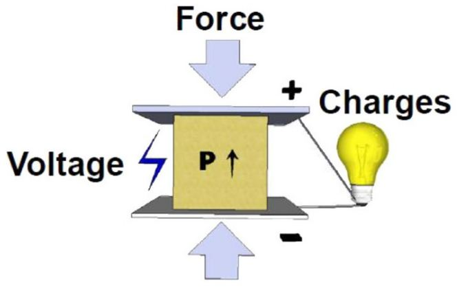 Picture of Concept and Principle
