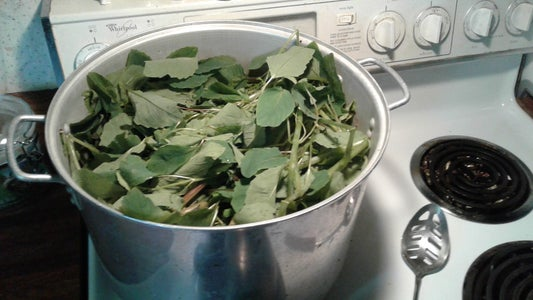 Boil Jewelweed in Water