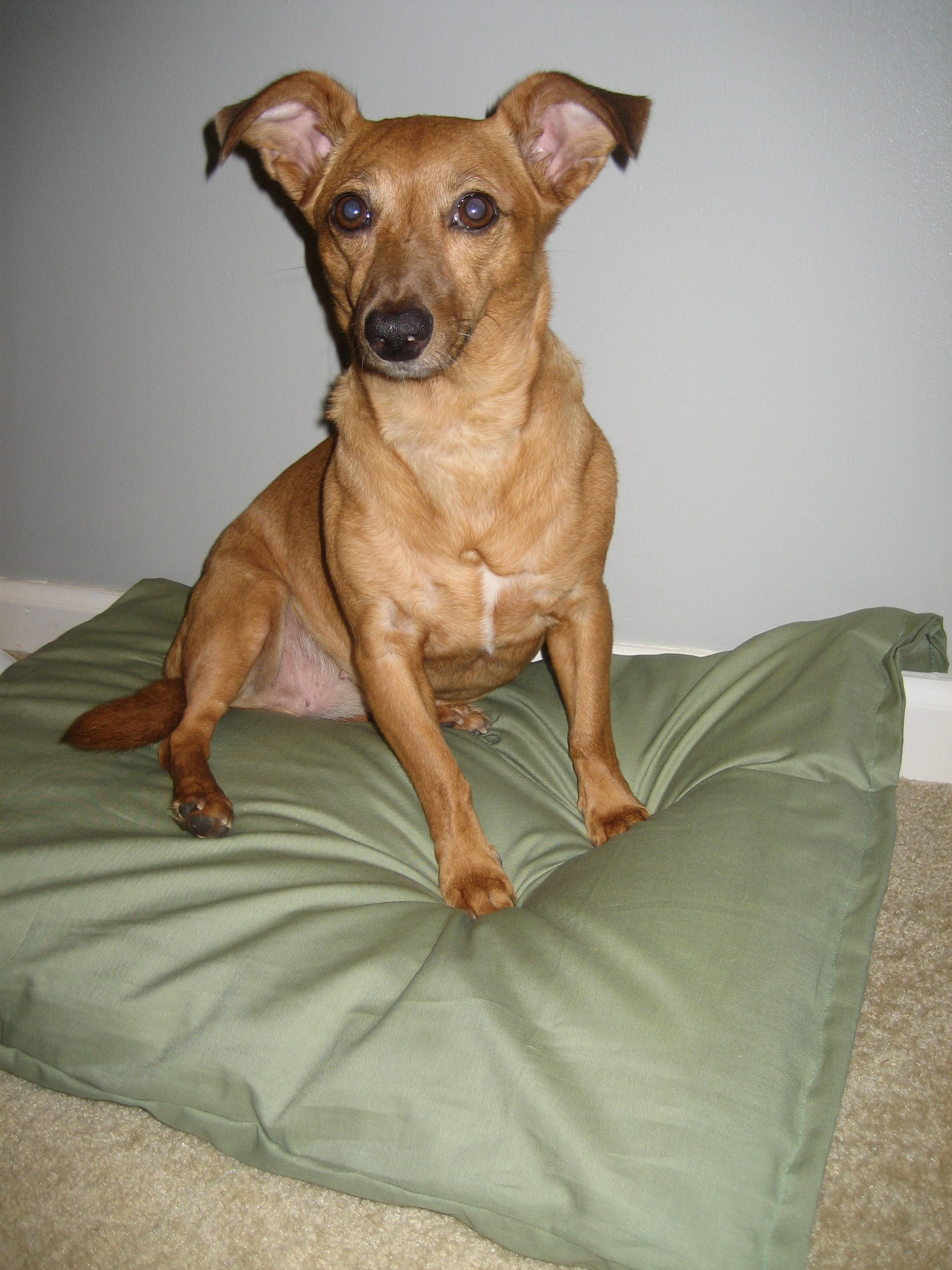 Picture of That's It! in 10 Short Minutes, Your Dog Will Be Able to Kick Back on His/her New Bed and Look Good Doin' It.�