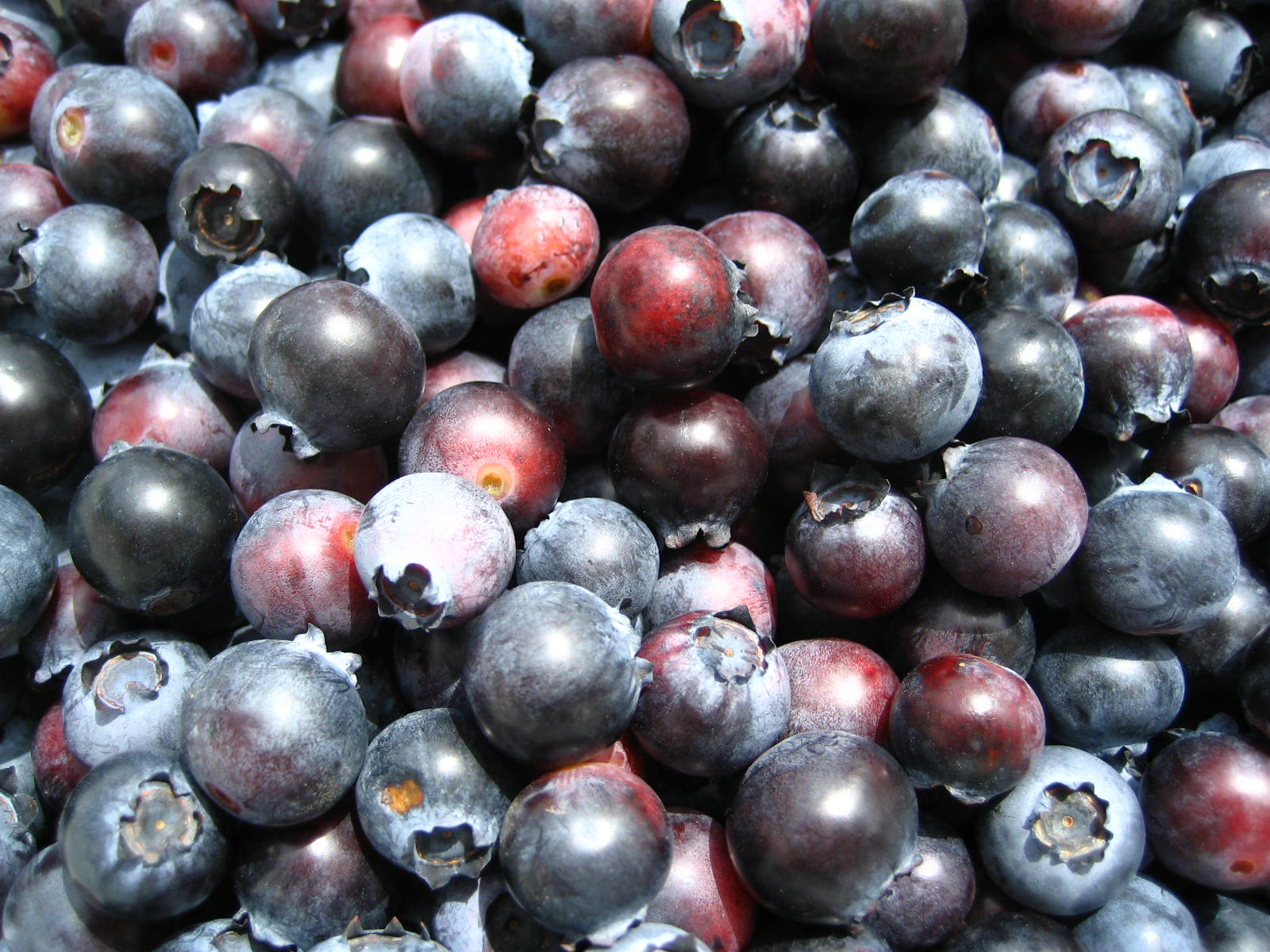 Picture of How to Freeze Blueberries