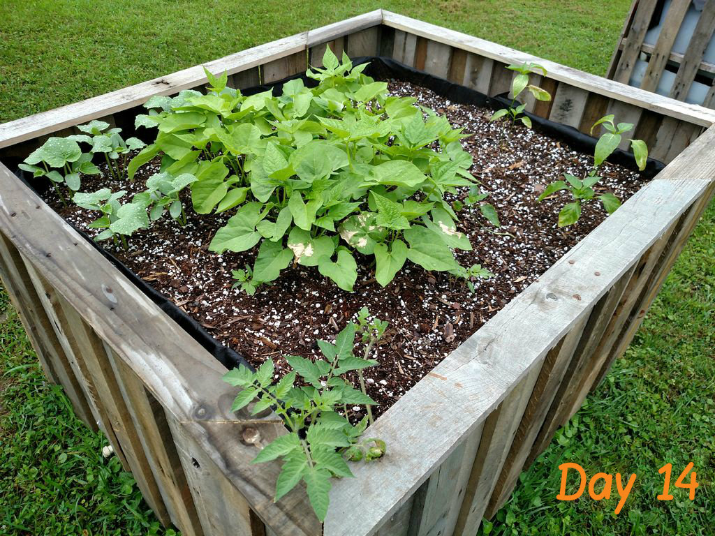 Picture of Plant Your Garden
