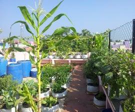 Roof Gardening