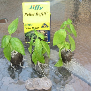 The Lazy Way/non-Water Way to Root/Propagate Basil and Herb-y Plants