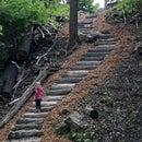 Log Path Cut Into a Hill