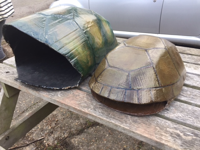 Picture of Galapagos Tortoise Shells