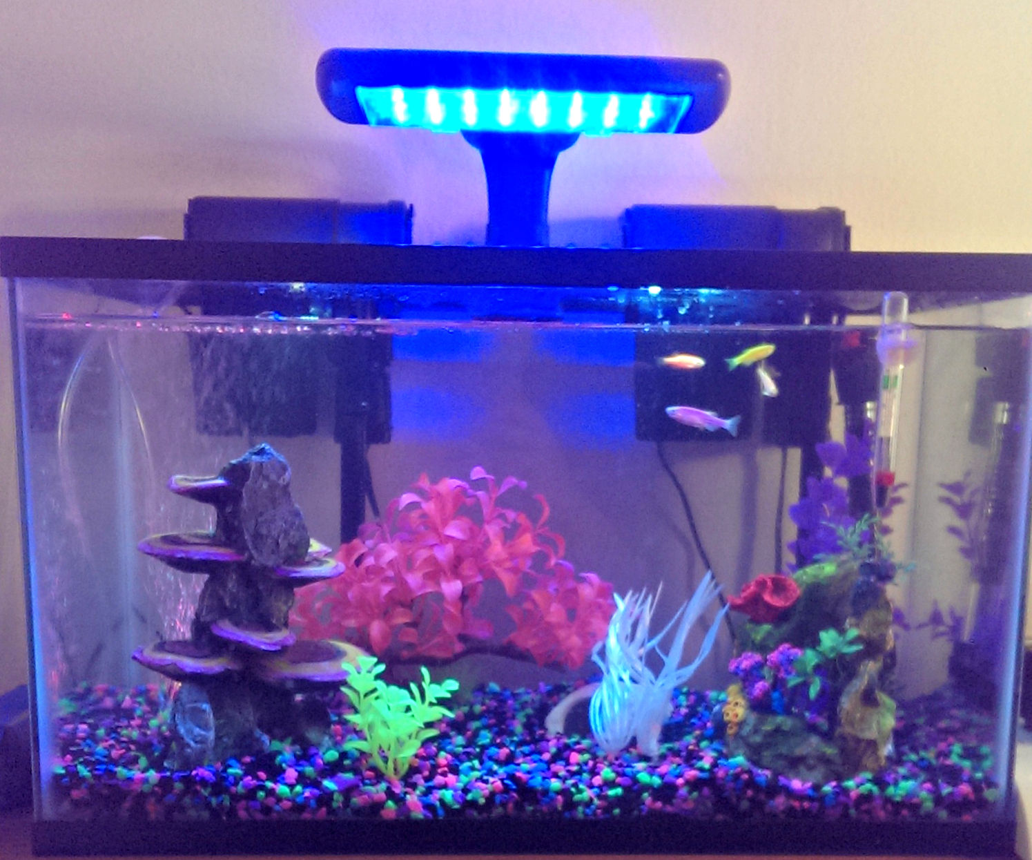 Setting Up a Fish Tank 9 Steps with Instructables