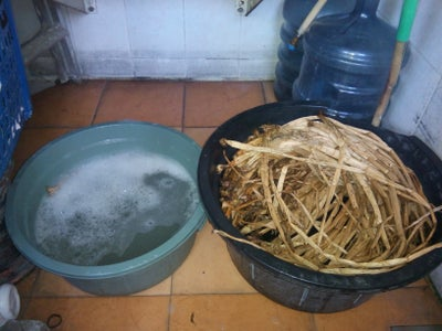 2. Get Ready the Hyacinth
