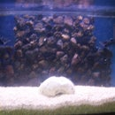 Lava Rock Aquarium Background
