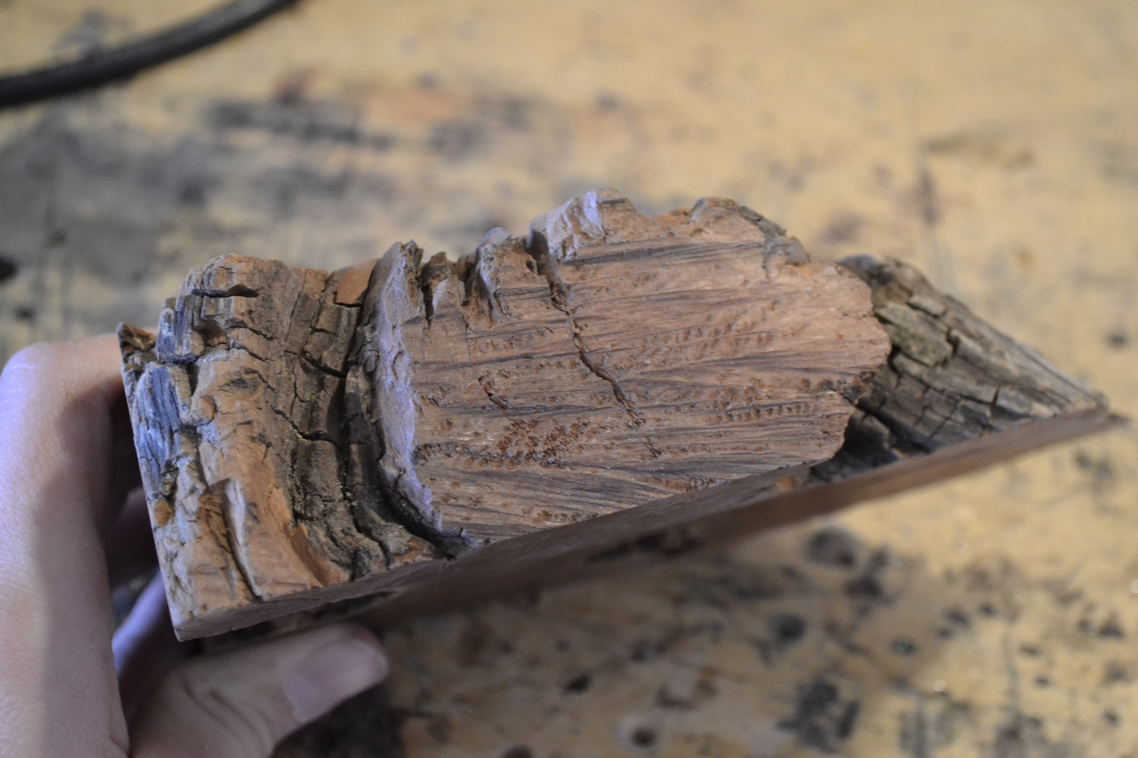 Picture of Find and Cut Your Wood.