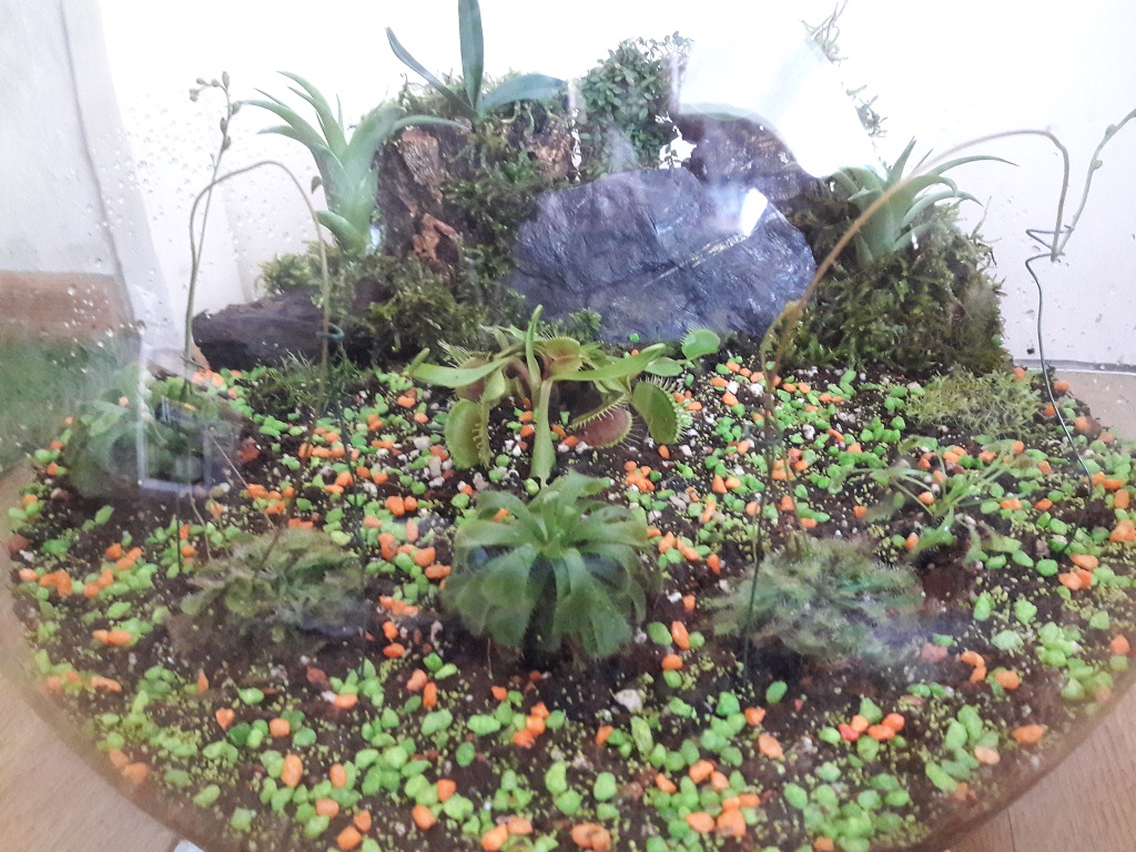 Picture of Carnivorous Plants (and Orchids) in a Fishbowl