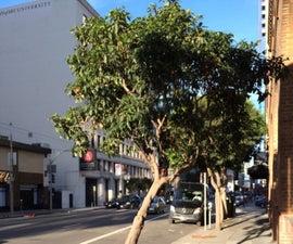 Tree Windscreen, San Francisco