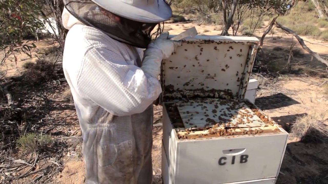Picture of Start by Slowly Lifting the Lid of the Beehive.