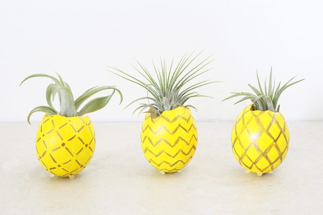 Picture of Pineapple Air Plant Holder