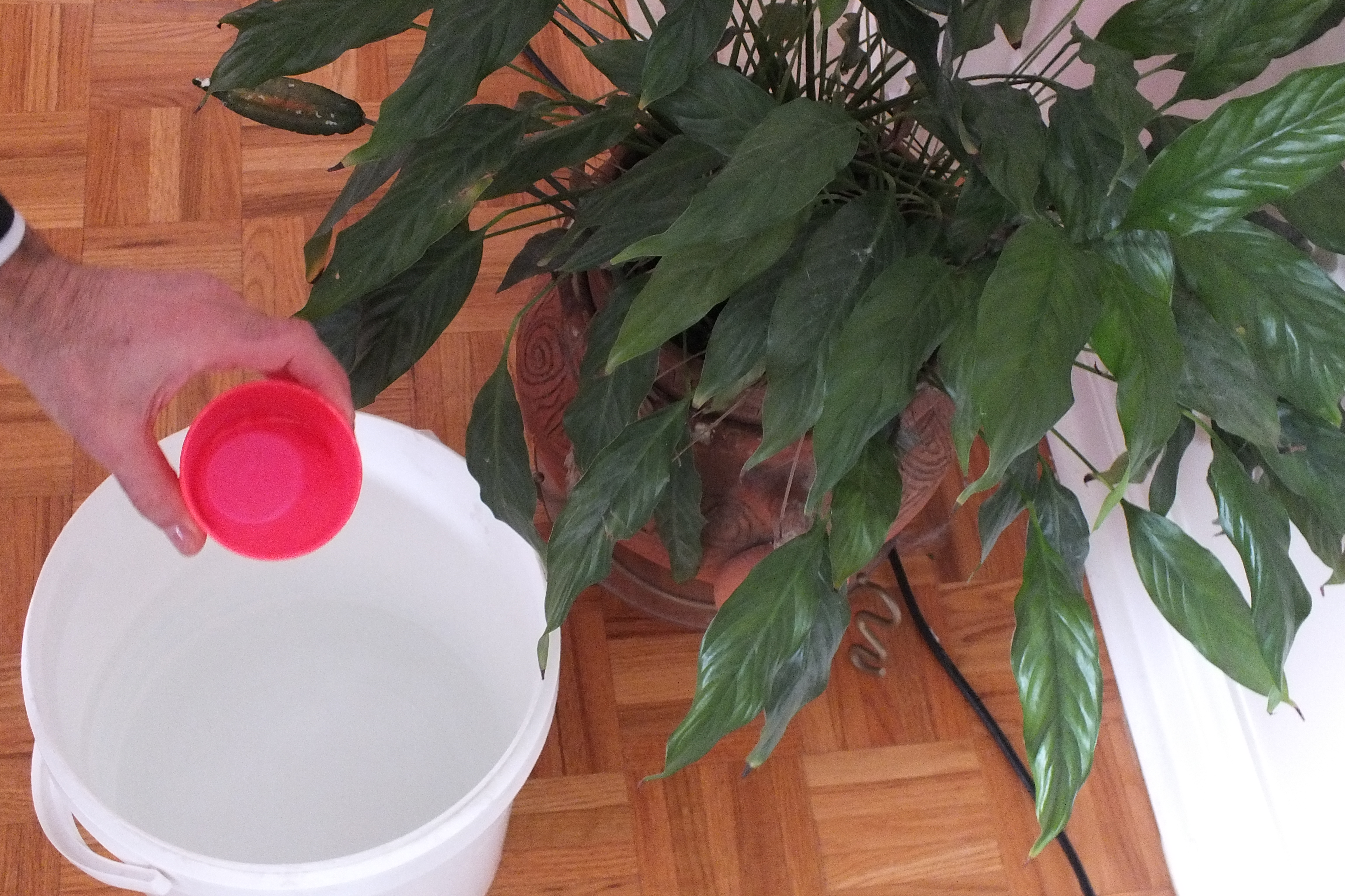 Picture of Water Indoor and Outdoor Plants