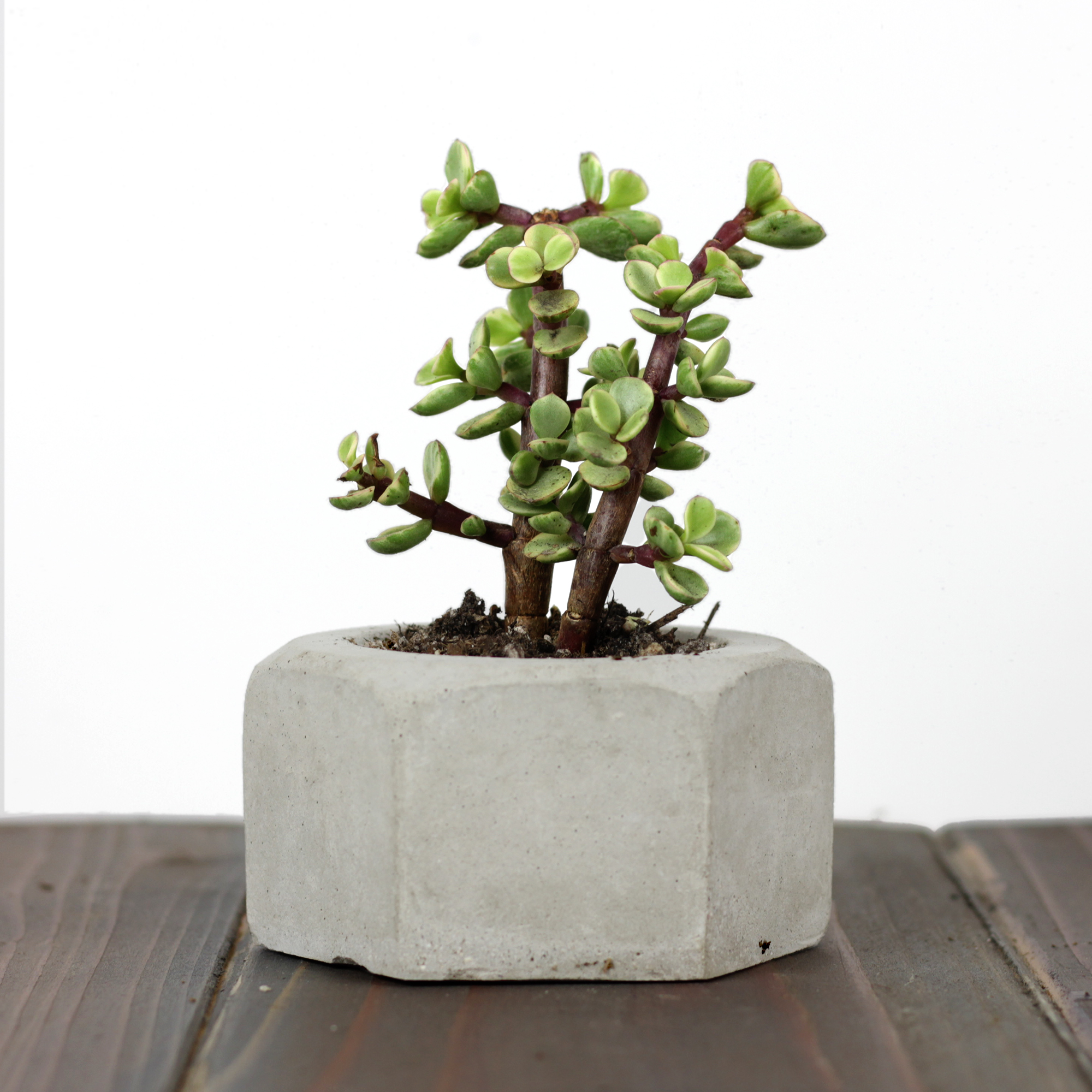 Picture of Making GIANT Concrete Hex Nut Succulent Planters