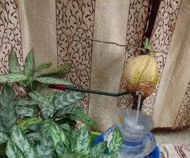 Tender Coconut Cascade Fountain