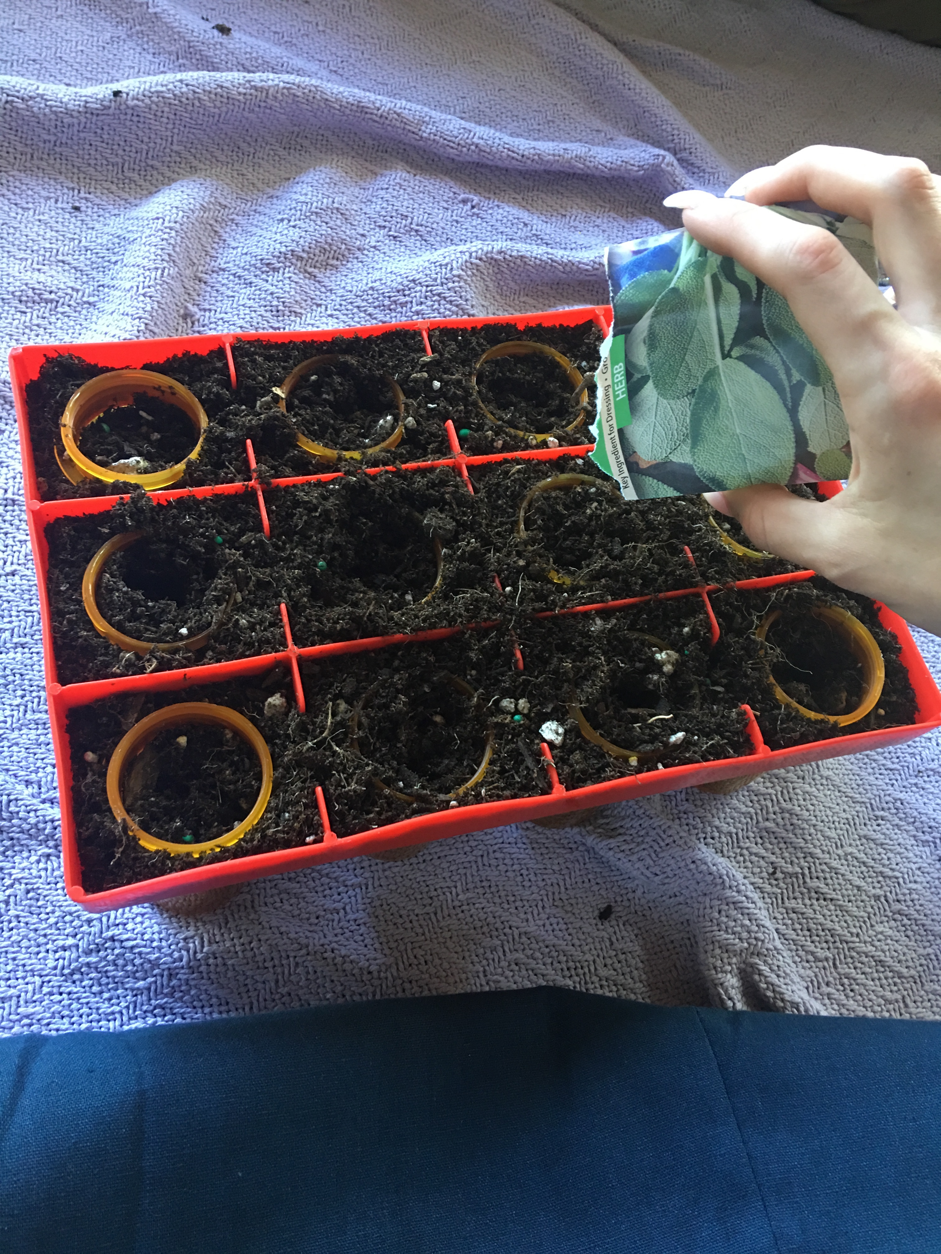 Picture of Add Seeds