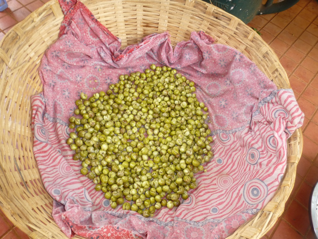 Picture of Remove the Berries for Drying