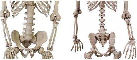 Picture of Hack and Repair Plastic Halloween Skeletons