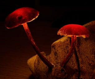 Enchanted Forest Mushroom Lights