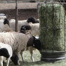 Bale Feeders for stock - Cheap & Quick