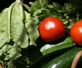 Domestically Sustainable Agriculture - Construction, Planting, and Harvesting