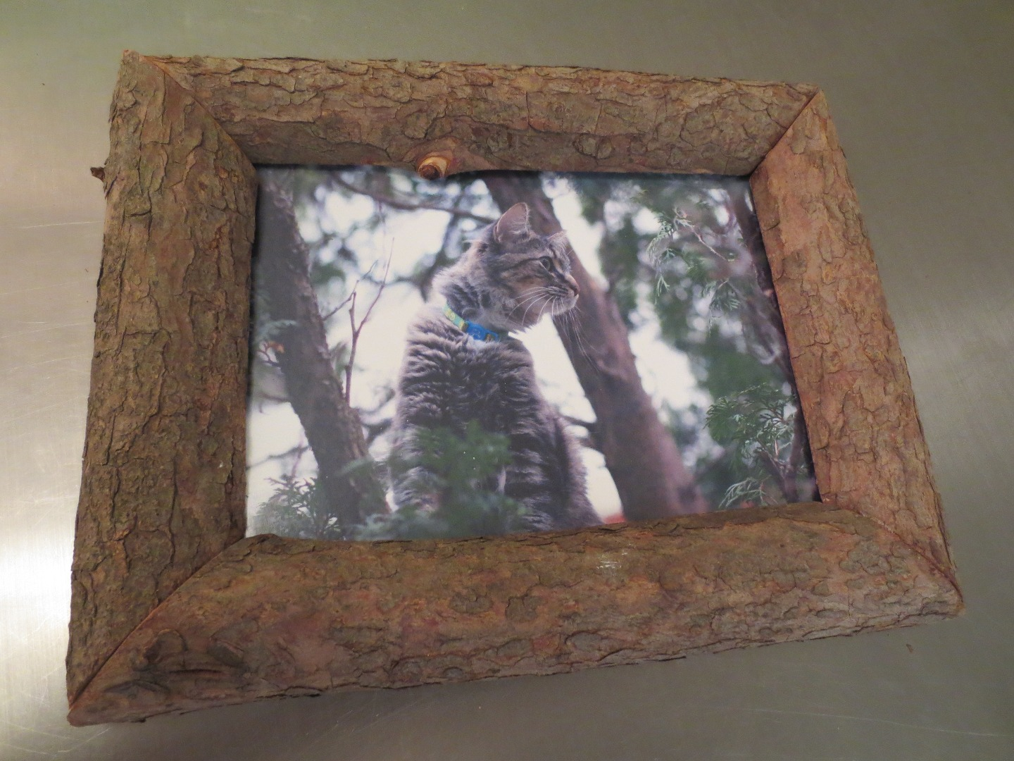 Picture of How to Make a 'Nature Frame'