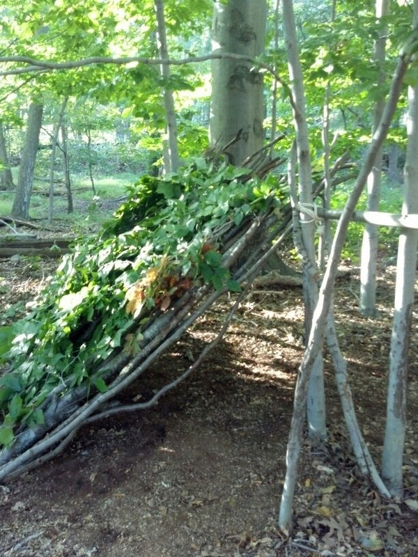 How to Create a Lean-to Shelter in the Deciduous Forest