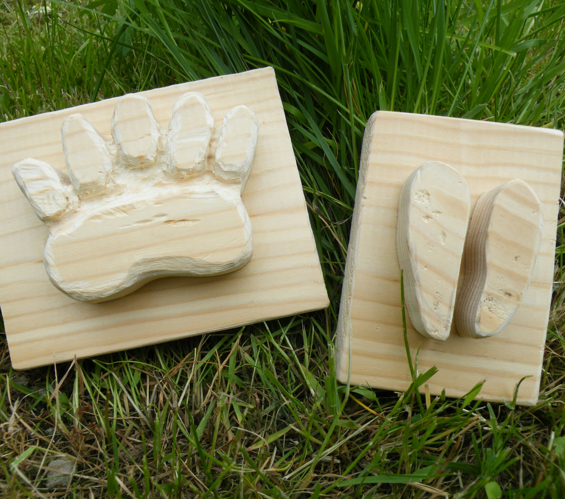 Picture of Animal Tracks for Plaster Casting.