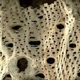 texture bark good.jpg